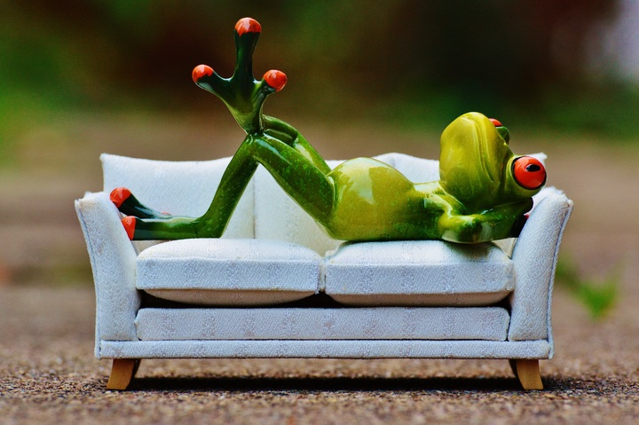 frog on couch